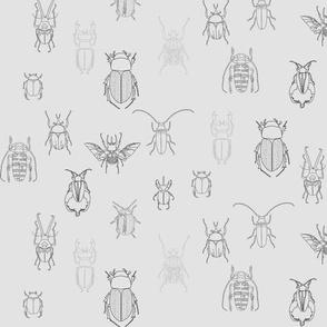 grey beetles on grey