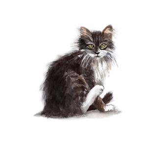 Little French Kitty, Furry Black Kitten, Cute Animal