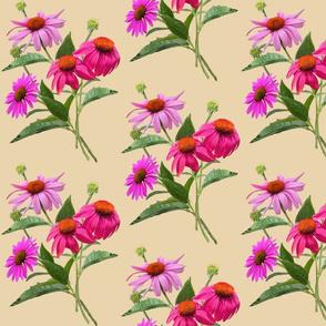 Echinacea Bouquet