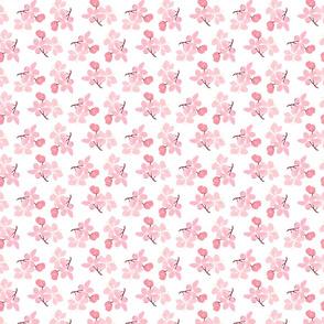 Sakura clusters