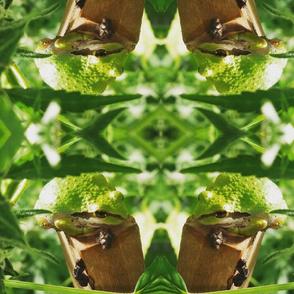 Ganga Garden Frog