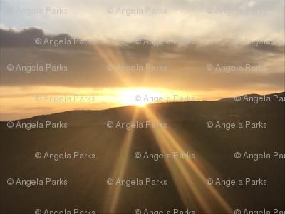 Trippy Merrill Sun Rays