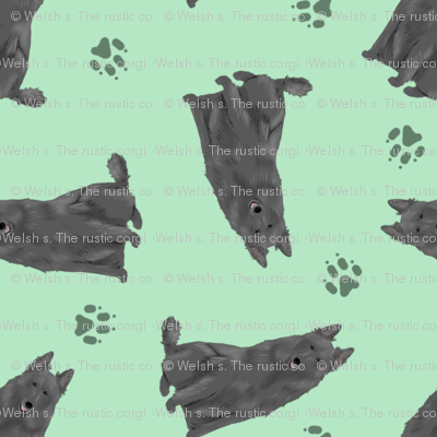 Tiny Belgian Sheepdogs - green