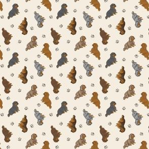 Tiny Longhaired Dachshunds - tan