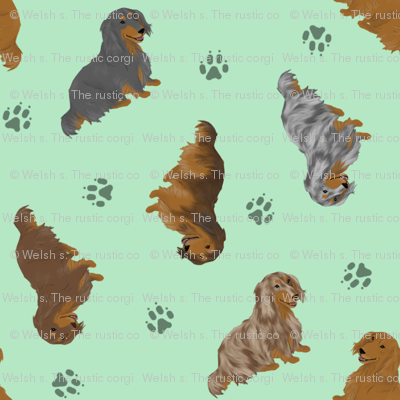 Tiny Longhaired Dachshunds - green