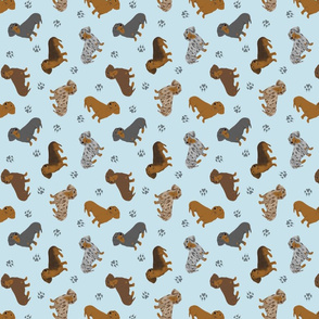 Tiny Smooth Dachshunds - blue