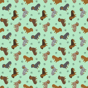Tiny Smooth Dachshunds - green