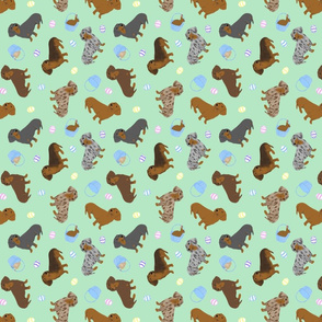 Tiny Smooth Dachshunds - Easter