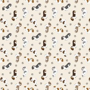 Tiny piebald Smooth Dachshunds - tan