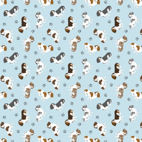 Tiny piebald Smooth Dachshunds - blue