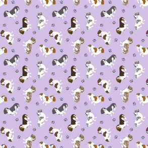 Tiny piebald Smooth Dachshunds - purple