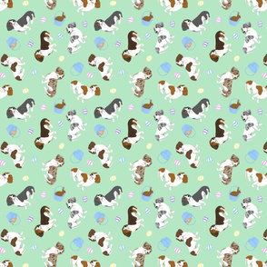 Tiny piebald Smooth Dachshunds - Easter