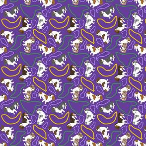 Tiny piebald Smooth Dachshunds - Mardi Gras