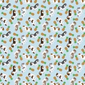 Tiny piebald Smooth Dachshunds - pineapples
