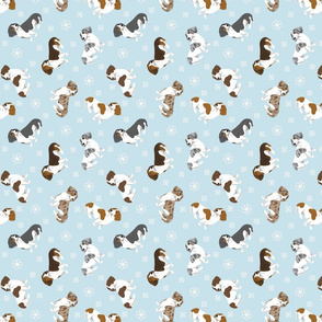 Tiny piebald Smooth Dachshunds - winter snowflakes