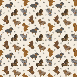 Tiny Wirehaired Dachshunds - tan
