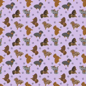 Tiny Wirehaired Dachshunds - purple