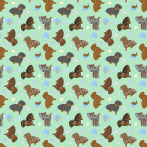 Tiny Wirehaired Dachshunds - Easter