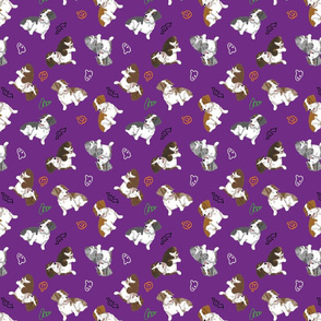 Tiny piebald Wirehaired Dachshunds - Halloween