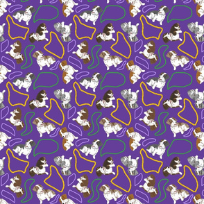 Tiny piebald Wirehaired Dachshunds - Mardi Gras