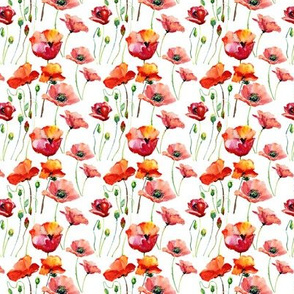 Coral Poppies // Small