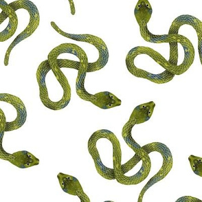 Light Green Snakes on White