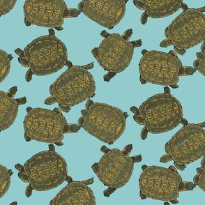 Box Turtles on Light Blue