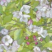 Rapple_blossoms_7_lightened_shop_thumb
