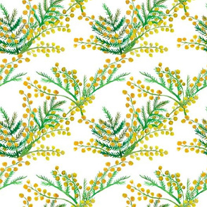 Flowers of Mimosa on white seamless pattern