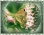 Butterfly_ed_ed_ed_thumb
