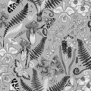 Orchid Botanical Study #021318 (grey monochrome)