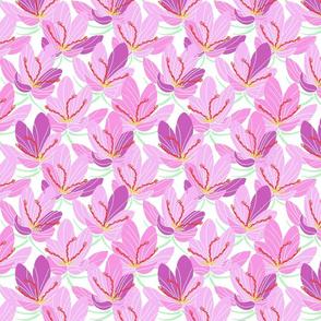 Pink Lavender Crocus Joy (white)