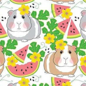large guinea-pigs-in-a-watermelon-patch