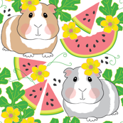 guinea-pigs-in-a-watermelon-patch