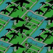 Migratory Pattern