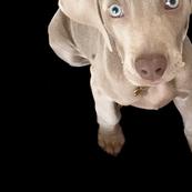 pup black