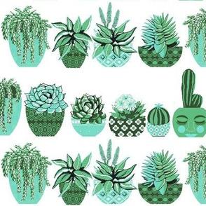 succulents & cacti  Moroccan garden