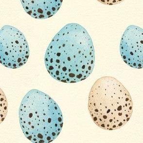 Songbird eggs