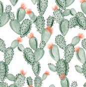 Rr6275069_rgreen-paddle-cactus-with-rose_shop_thumb