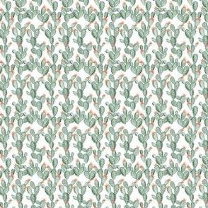 green paddle cactus + rose // micro