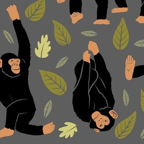 Large Scale Chimpanzees on Gray