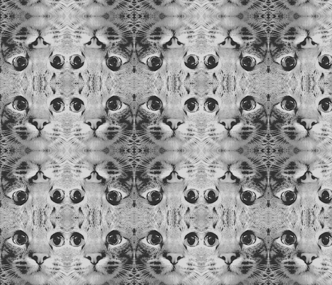 Black and White Cat fabric by maryrash on Spoonflower - custom fabric