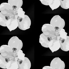 Bermuda flower small black and white