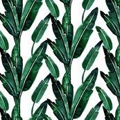 Rrbanana-leaves_shop_thumb