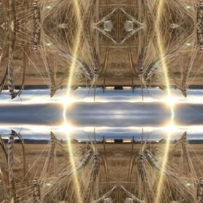 Malin Field at  Sundown