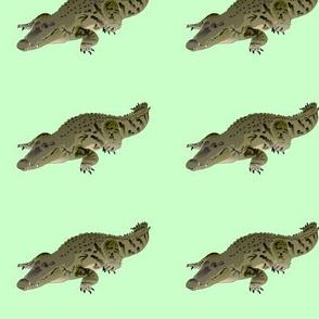 Resting Crocodile in green