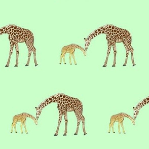 Mom and baby giraffe in green