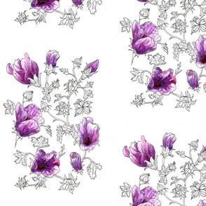Alyogyne huegelii rosea
