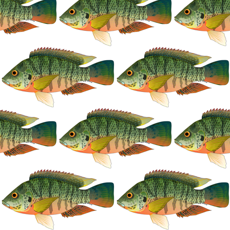 Redbreast Tilapia fabric by combatfish on Spoonflower - custom fabric