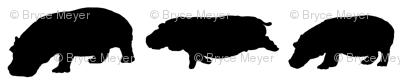 3 Hippo shadows